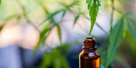 CBD Oil – Wellness